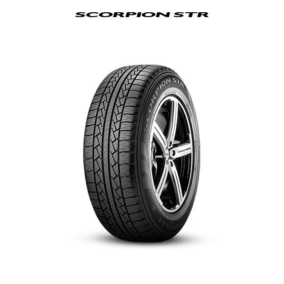 94343_scorpion_STR_bianco